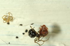 What S Trending In Bed Bugs Pct Pest Control Technology