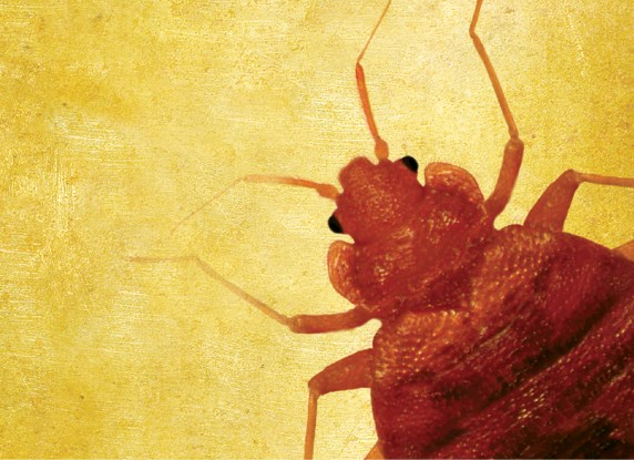 Bed Bugs as Vectors: What We Don't Know Could Hurt Us - PCT