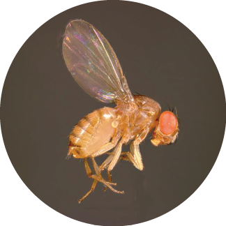 Top Tips For Flies - PCT - Pest Control Technology