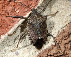 Managing Chronic Conflict Pct Pest Control Technology