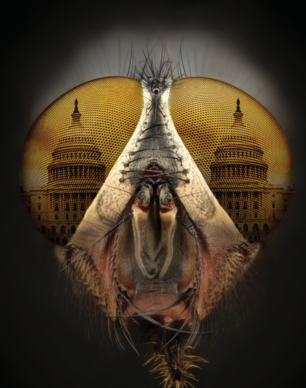 All Eyes On The Hill 8 Issues To Watch Right Now Pct Pest