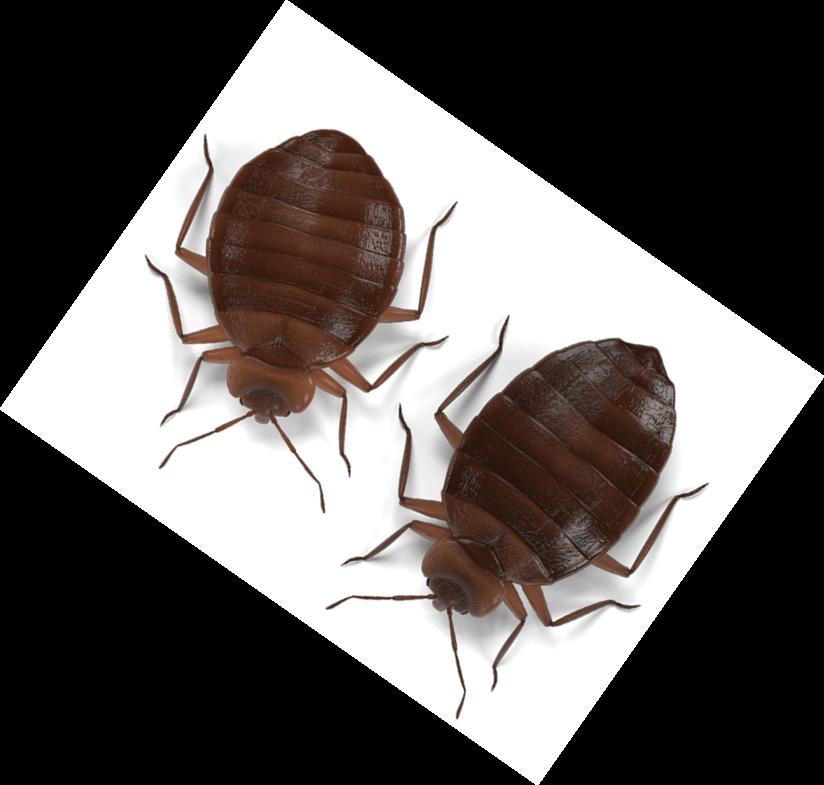 Resistance Is Not Futile Pct Pest Control Technology