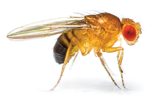 5 Tips for Fighting Fruit Flies - PCT - Pest Control ...