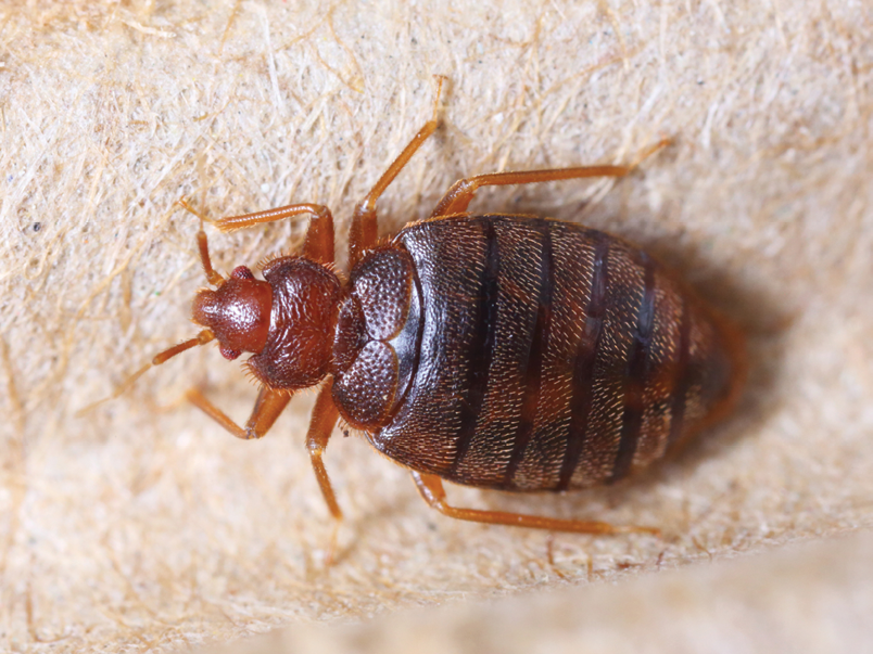 free bed bug inspection columbus ohio