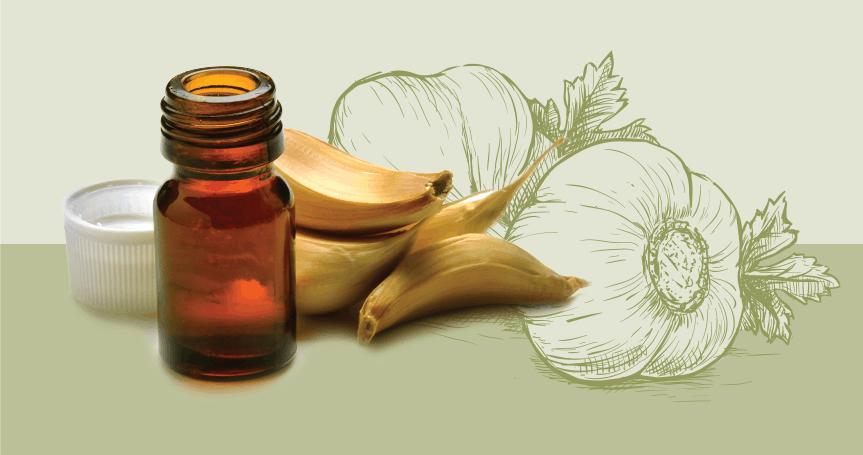 Garlic 'Roasts' Lyme Bacteria