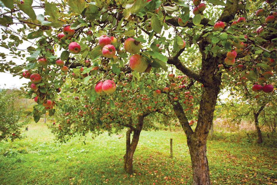 apple globalization