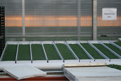 Microgreens 101: a production guide - Produce Grower