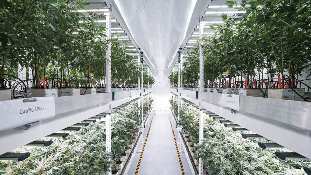 State of the Cannabis Lighting Market - State of the Cannabis Lighting Market & Vertical Farming - Cannabis Business Times azcodes.com