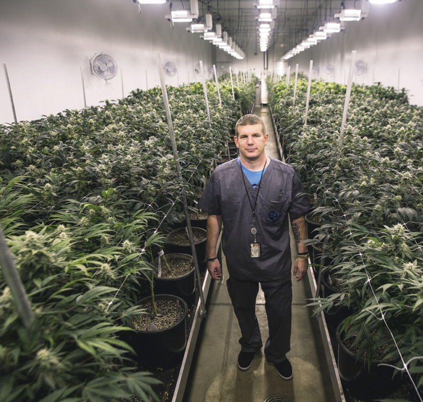 31 Ways to Grow Smarter and Maximize Yield - Cannabis