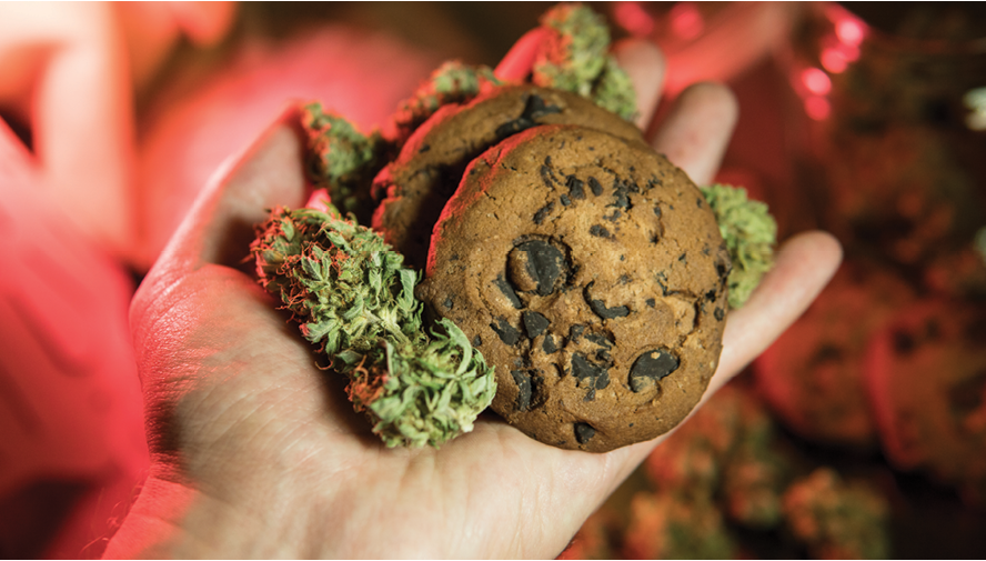 6 Cannabis Food Safety and Quality Tips