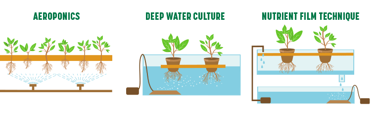 Deep Water Culture Hydroponic System DWC Nutrit Delta 5