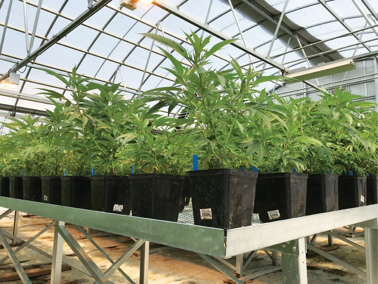 The 9 Most Pressing Facility Design Questions Growers Ask - Cannabis