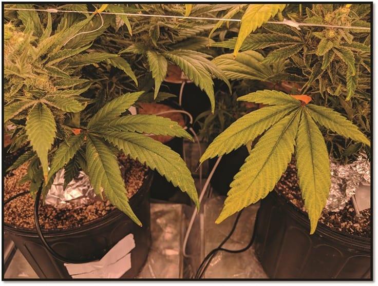 magazine.cannabisbusinesstimes.com